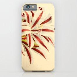 Flower brunswigia magnifica 27 iPhone Case
