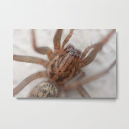 Web-Head Metal Print