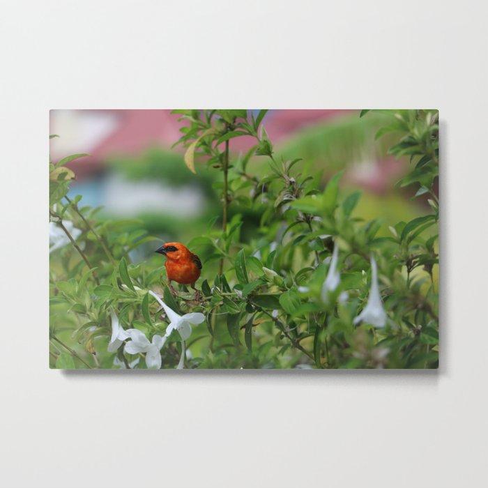 Island Bird Metal Print