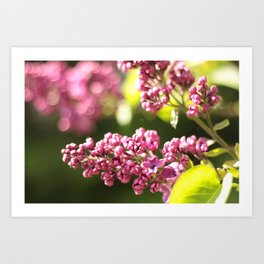 Summer Pinks Art Print