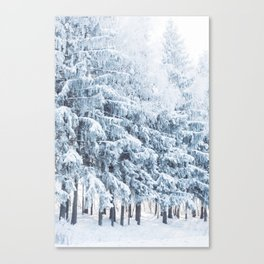 Winter scene. Forest in the snow. Canvas Print
