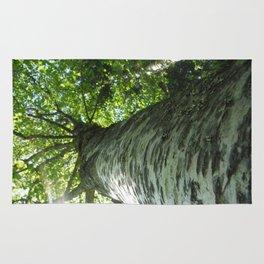 Sacred Birch by Mandy Ramsey, Haines, AK Rug