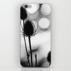 Teasel Silhouette iPhone & iPod Skin