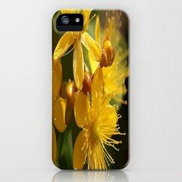 Turkish St Johns Wort Wild Flower Vector Image iPhone Case