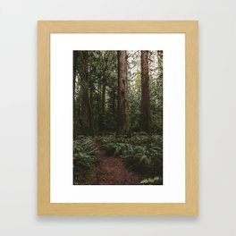 Old growth forest Framed Art Print