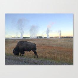 Bison Springs Canvas Print