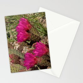 Beavertail Cactus in Bloom - II Stationery Cards