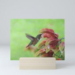Hummingbird in Justicia Mini Art Print