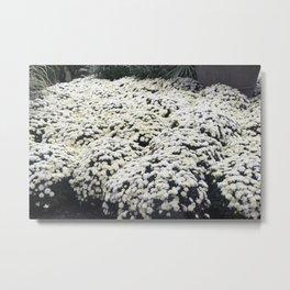 Longwood Gardens Autumn Series 28 Metal Print