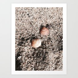 Shells and Sand Art Print