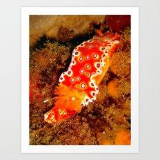 Bright Orange Nudibranch Art Print