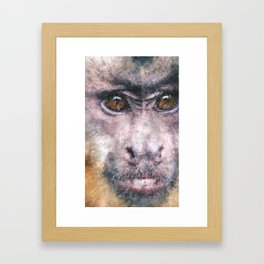 Chino the Cheeky Capuchin Framed Art Print