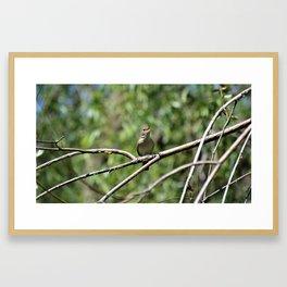House Wren Framed Art Print