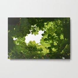 Buckeye Canopy Metal Print
