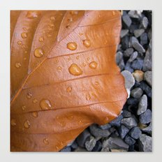 autumn leaf macro II Canvas Print