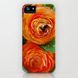 Orange Ranunculus Flowers 2 iPhone Case