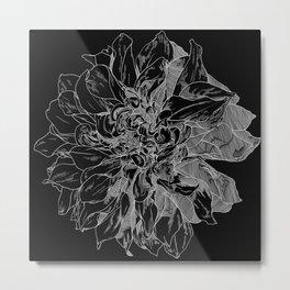 Black Dahlia Metal Print