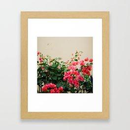 Pink on Holga Framed Art Print