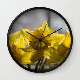 Daffodils Image, from my floral photography collection Wall Clock