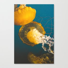 Pacific Sea Nettle Jellyfish II Canvas Print