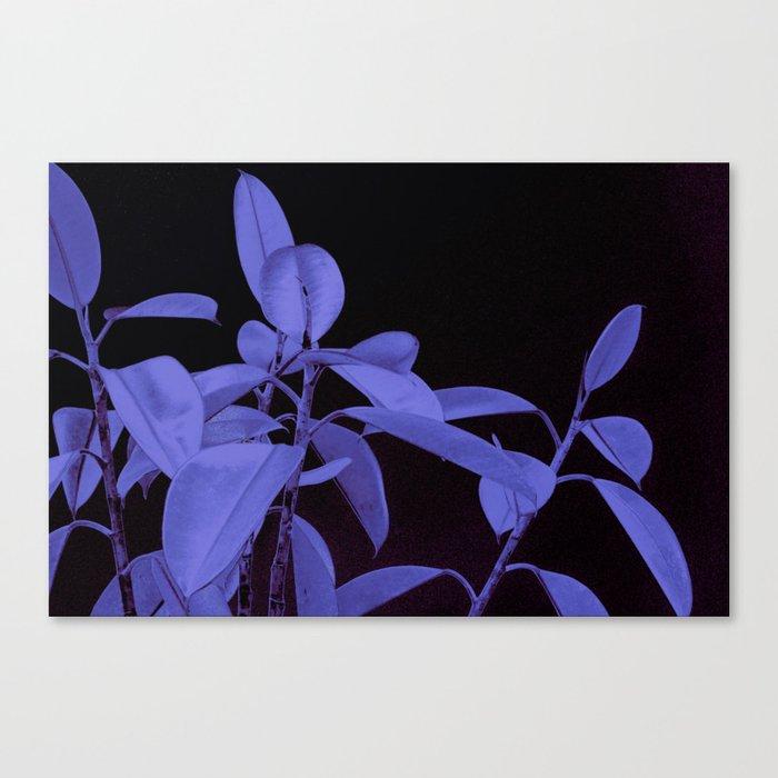 Rubber plant II Canvas Print