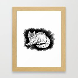 Dio the Maine Coon Framed Art Print