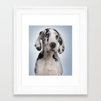 great dane Framed Art Prints featuring Great dane by Life on White Creative