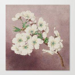 Shirayuki - White Snow Cherry Blossoms Canvas Print