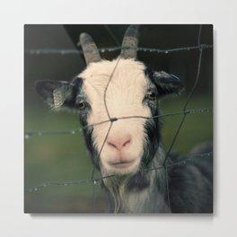 The Goat II Metal Print