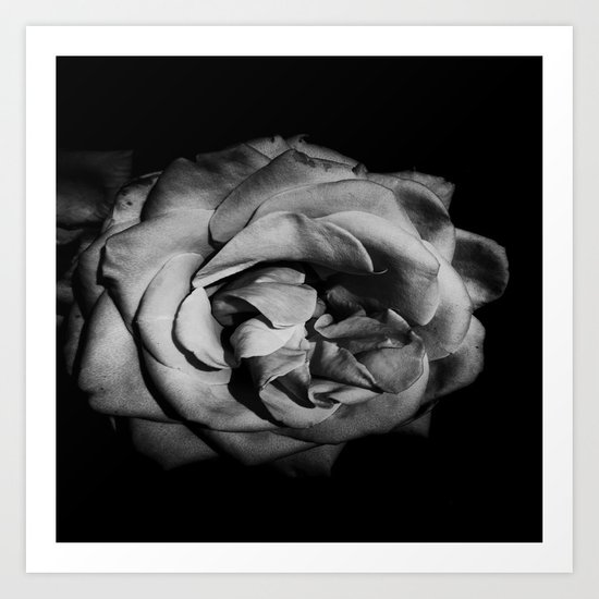 Darken Rose Art Print