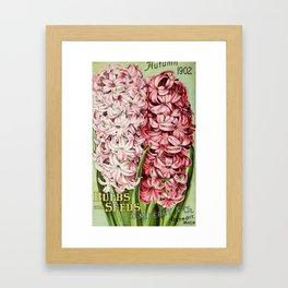 D.M. Ferry Bulbs & Seed Catalogue 1902 - Hyacinths Framed Art Print