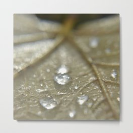 raindrops on fallen leaf Metal Print