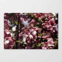Pink thoughts Canvas Print