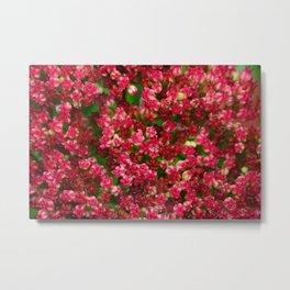 Sedum Flowering in the Rain Metal Print