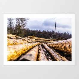 Poltery Site (Wood Storage Area) After Storm Victoria Möhne Forest 6 Art Print