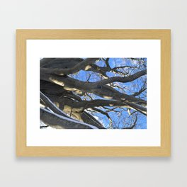 European Beech Tree Branches Framed Art Print