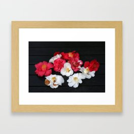 Red and White camelia Framed Art Print