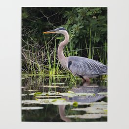 Heron pose in the channel Poster