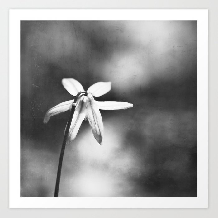 Black And White Flower Photography Dark Grey Nature Photo Gray