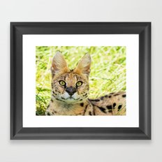 SERVAL BEAUTY Framed Art Print