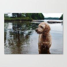 Dog in a lake Canvas Print