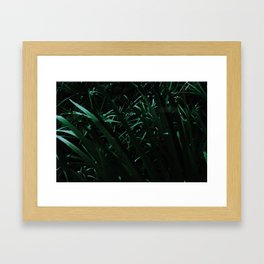 Grass blades basking in the sun - Abstract Framed Art Print