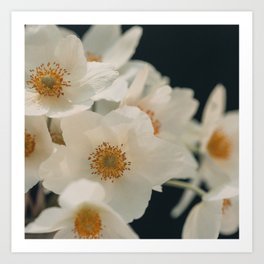 Anemone On Black Art Print
