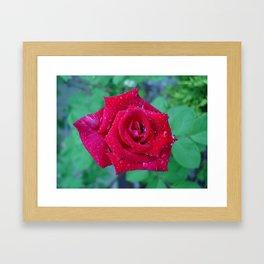 Rose Drops Framed Art Print