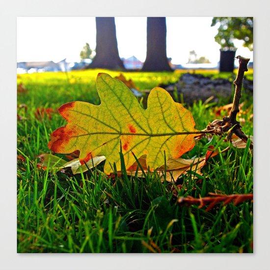 Early Autumn leaf Canvas Print