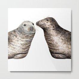 Grey seals(Halichoerus grypus) Metal Print