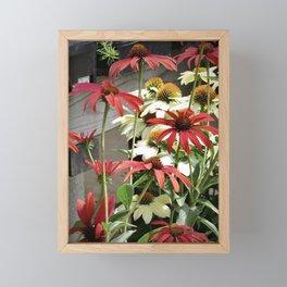red daisies for sale Framed Mini Art Print
