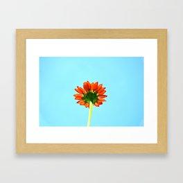 Bloom From Below Framed Art Print