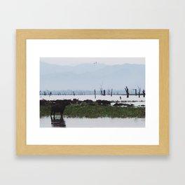 Water buffalo lake Framed Art Print