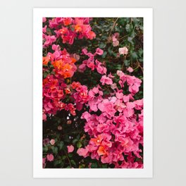 California Blooms IV Art Print